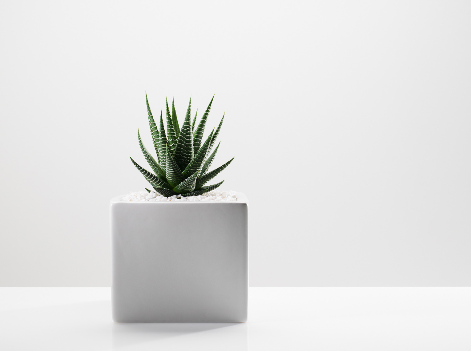 Plant Photography